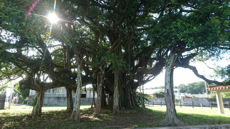 樹齢300年もの巨木があなたをお待ちしております(笑)