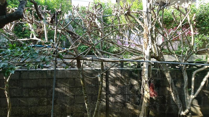 ブロック塀の上をコソ泥のように横移動しながら剪定したんだね。