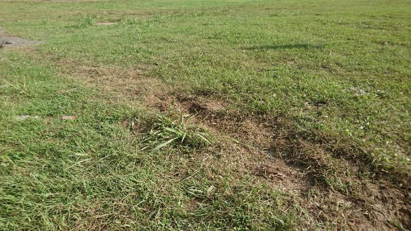 芝生も全てが綺麗に布設されてはなく。