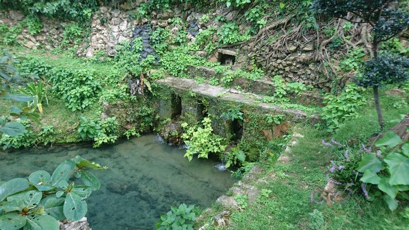 琉球石灰岩に張り付く緑が雰囲気を醸し出す。