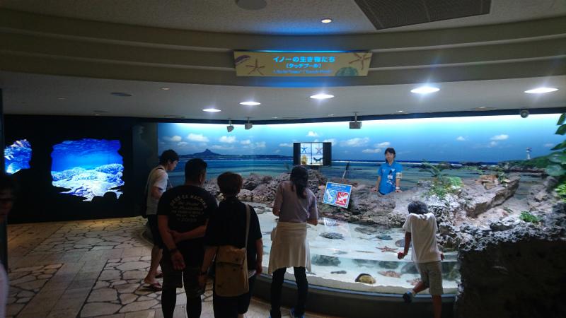 入口すぐ横に海洋生物に触れる体験コーナーが。