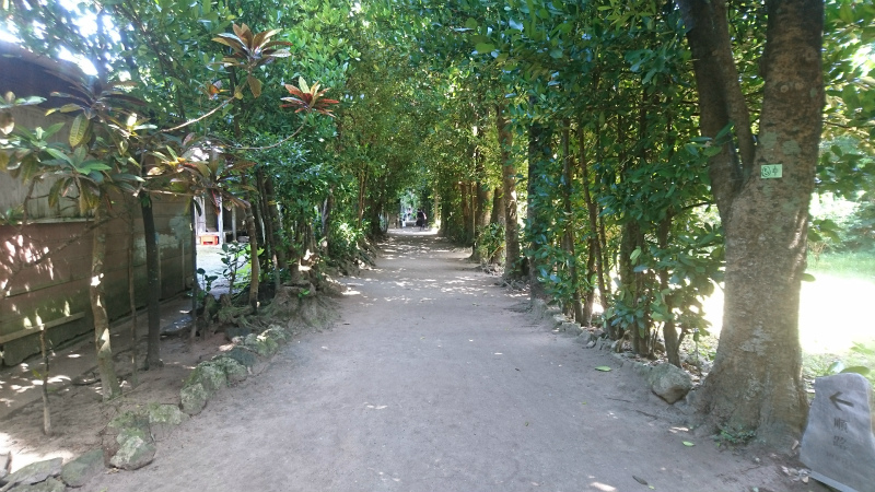 フクギ並木のオンパレード