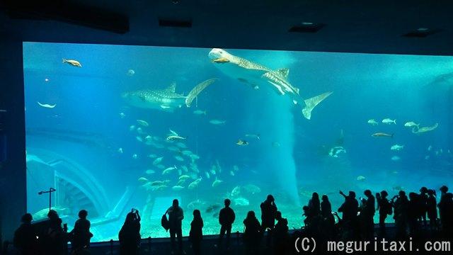 美ら海水族館・水槽の中のジンベエザメ