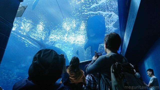 美ら海水族館とジンベエザメを撮る車椅子ユーザー