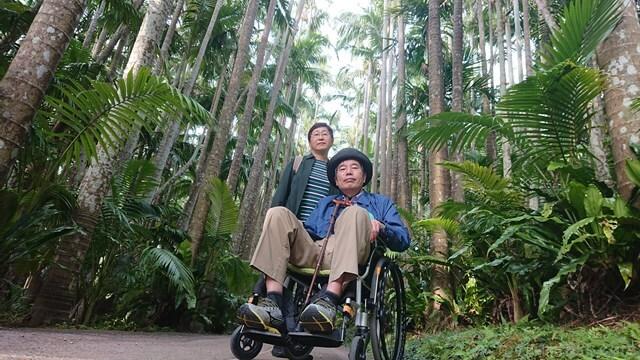 東南植物楽園・ユスラヤシ並木ロード